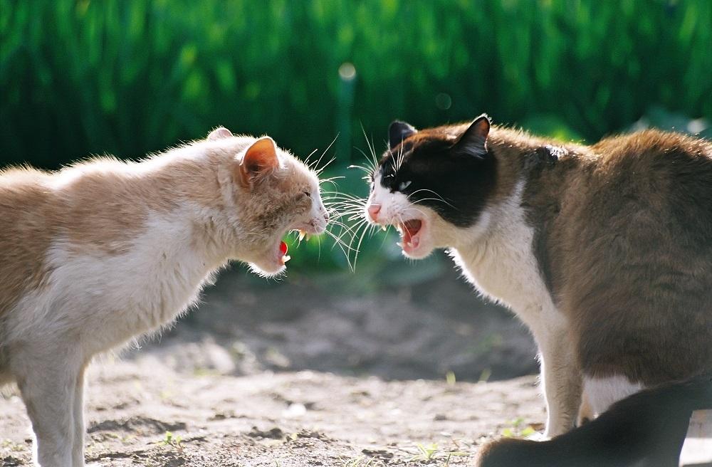 Что означает если приснилось кошки дерутся к чему снится во сне - толкование сна кошки дерутся: сонник миллера, сонник ванги, сонник цветкова, исламский и мусульманский сонник, сонник фрейда и другие.